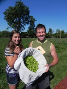 Hugo Derochers of Tribal Hops inspecting the harvest.