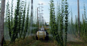 New Hopsprayer Being Tested