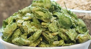 Drying Hops On A Small Scale